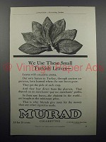 1909 Murad Cigarette Ad - We Use Small Turkish Leaves