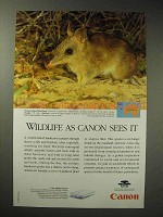 1998 Canon FB620P Scanner Ad - Western Barred Bandicoot