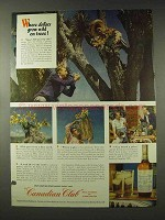 1948 Canadian Club Whisky Ad - Dollars Grow on Trees