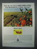1966 FMC Tomato Harvester Ad - Multi-Million Crop