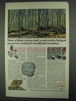 1967 Sinclair Oil Ad - Natural Woodland Treasure