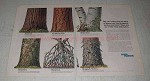 1967 St. Regis Paper Ad - Bark of Every Tree