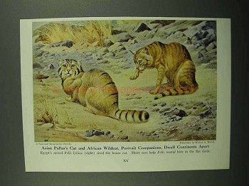 1943 Asian Palla, African Wildcat Illustration - Weber