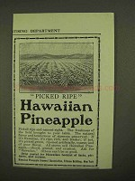 1909 Hawaiian Pineapple Ad - Picked Ripe