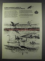 1981 AMOCO Oil Ad - A Bird Watcher's Guide