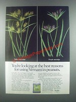 1985 Stauffer Vernam Ad - For Using in Peanuts
