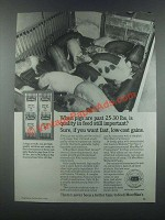 1985 MoorMan's Mineral Ad - When Pigs Are Past 25-30