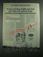 1987 MoorMans AU Minerals Ad - Get More From Grazing