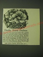 1900 John Lewis Childs Oxalis, Grand Duchess Flowers Ad