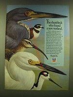 1990 Chevron Oil Ad - The shorebirds who found a new wetland