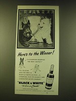 1951 Black & White Scotch Ad - Here's to the winner