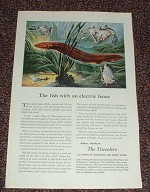 1949 Travelers Insurance Ad, Electric Eel NICE!!