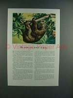 1945 Travelers Insurance Ad w/ Three-toed Sloth