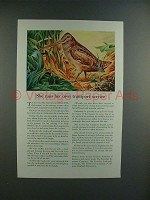 1945 Travelers Insurance Ad w/ American Woodcock!