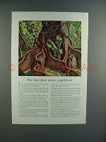 1941 Travelers Insurance Ad w/ Silk-Cotton Tree