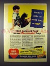 1941 Red Heart Dog Food Ad - Boston Terrier