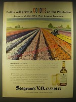 1946 Seagram's V.O. Canadian Whisky Ad - Cotton will grow in Colors on this