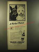 1950 Black & White Scotch Ad - A perfect picture