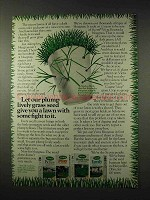 1977 Scotts Grass Seed Ad - A Lawn With Some Fight