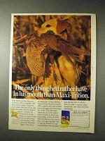 1990 Field Trial Maxi-trition Dog Food Ad, In His Mouth