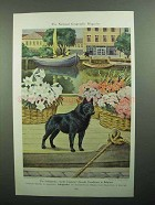 1943 Schipperke Illustration by Walter A. Weber