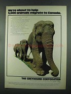 1972 Greyhound Corporation Ad - 5,000 Animals Migrate