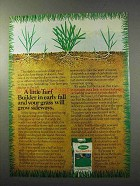 1977 Scotts Turf Builder Ad - In Early Fall