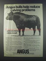 1981 American Angus Association Ad - Calving Problems