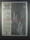 1981 U.S. Forest Service Ad - Trees Go Down in Flames