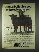 1982 American Angus Association Ad - More Calves