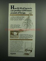 1984 Allied Nitragin Ad - More Pounds of Forage