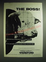 1985 American Hereford Association Ad - The Boss!