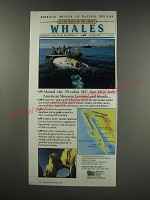 1991 American Museum of Natural History Discovery Cruises Ad - Great Whales