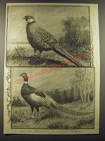 1887 Illustration of English Pheasants in America