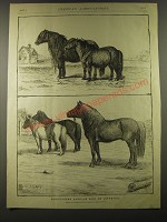 1887 Illustration of Shetlands abroad and in America