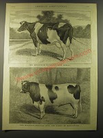 1887 Illustration by C. Palmer - The Holstein-Friesian Cow Jewel