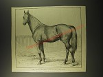 1887 Illustration by Forbes - The trotting-bred stallion lawgiver