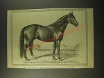 1887 Illustration of The American Trotting-Bred Stallion Sherman