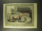 1887 Illustration of Thoroughbred Anglo-Merino Sheep
