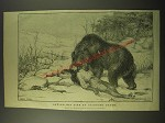 1887 Illustration of Bear - Saving his life by feigning death