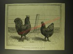 1887 Illustration by J Payne - Pure-Bred Langshan Fowls
