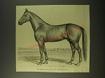 1887 Illustration of the Famous Road Stallion King Wilkes