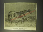 1887 Illustration of Queen Mary, The Dam of Bonnie Scotland