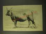 1887 Illustration of a typical Podolian cow