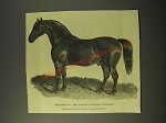1887 Illustration of Phenomenon, the famous Norfolk Stallion