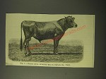 1887 Illustration by Schreiber - Fig. 1 - Jersey Bull Eurotas Black Prince