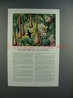 1943 Travelers Insurance Ad w/ Cacique, Tropical Oriole