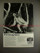 1974 Canon F-1 F1 Camera Ad w/ Monkey - Faraway Faces!!