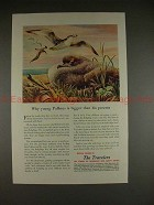 1951 Travelers Insurance Ad, Young Puffinus is Bigger!!